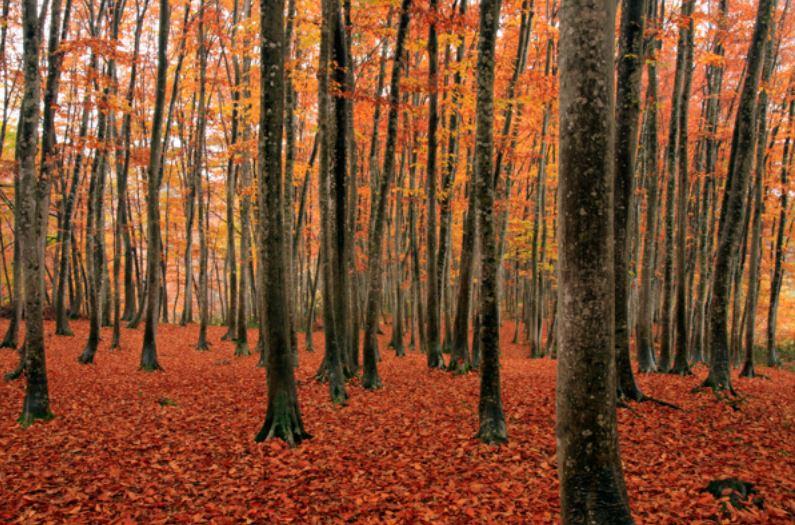 十日町の美人林