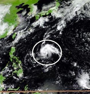 台風20号2019(ノグリー)のたまご